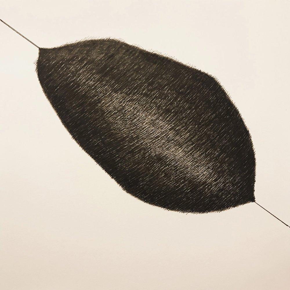Cocoon, 2018, pen on paper, 25x25cm