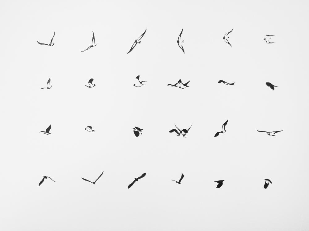 Lapwings*