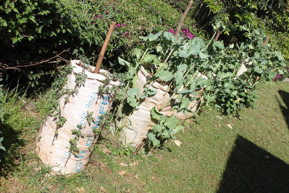 Spring 2014_Food Security photo 3.jpg