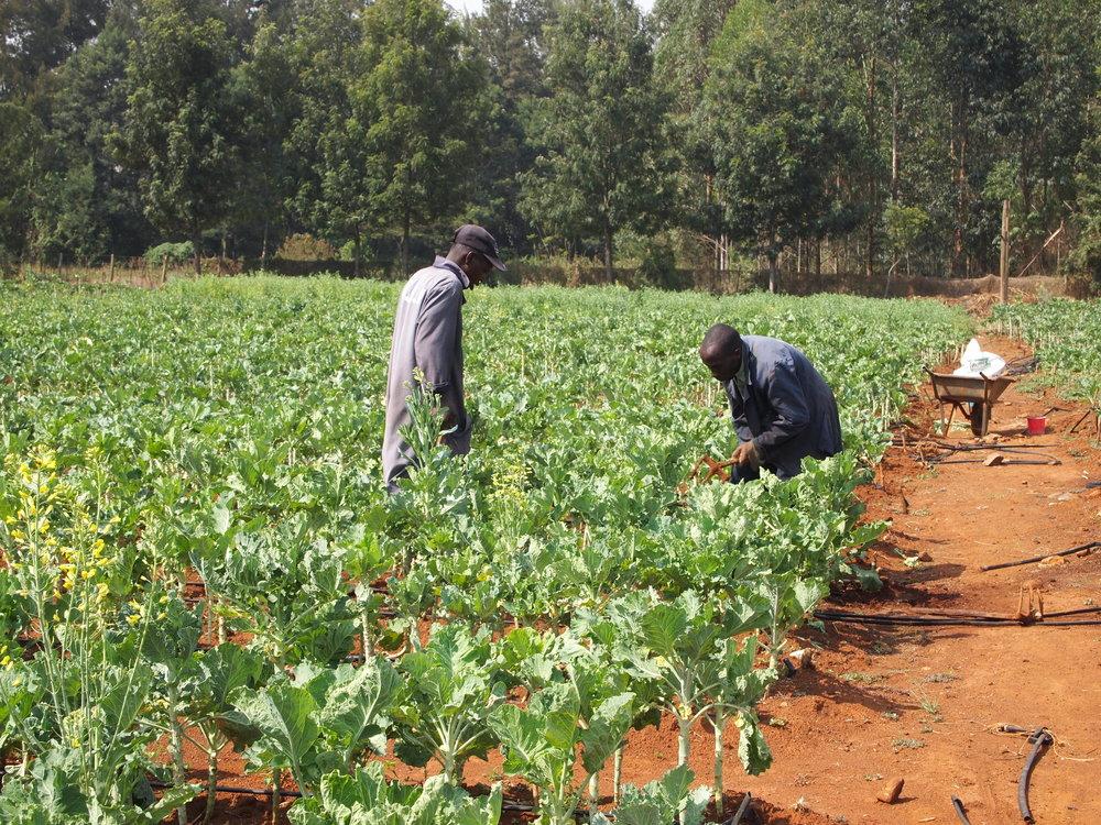 Spring 2014_Food Security photo 2.JPG