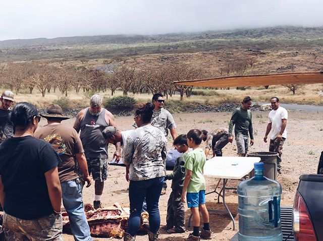 Ka Ohana O Kahikinui will be holding its next community harvest on Sunday August 12th. This harvest will be open to Kahikinui community members and Waiohuli Hawaiian Homesteaders Inc members. Please spread the word and contact the Kahikinui and Waiohuli homestead associations for more information.
