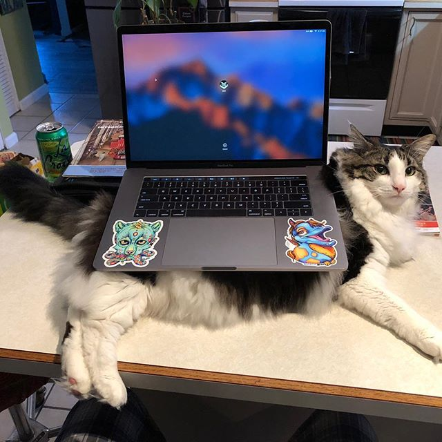 I like Metots stickers. I like Metots stickers on a laptop. I like Metots stickers on a laptop on a cat. Mr. Boo does not like them on a cat, nor on a laptop. He does not like them here or there. He does not like them anywhere!