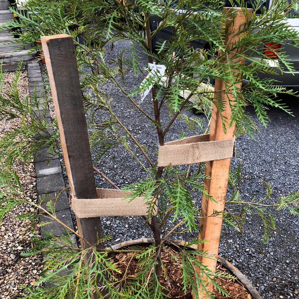 Copy of Tree Tie & Wooden Stakes