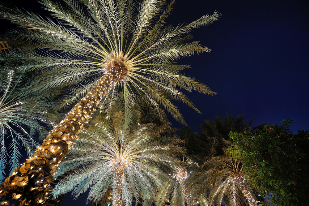 christmas-palm-tree-i5vuciid.jpg