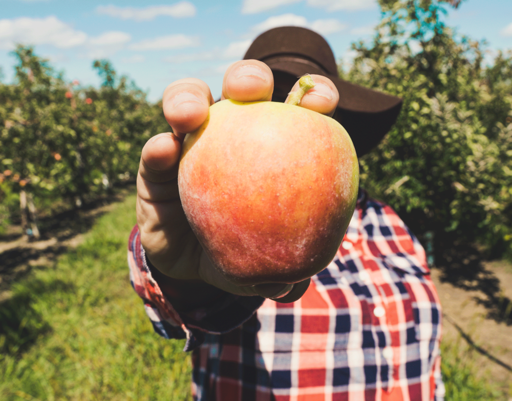Farm to Table Orchards - PICK FRESH FRUIT ALL SUMMER LONG