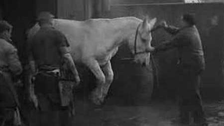 #22)Blood of the Beasts - (1949 - dir. Georges Franju)