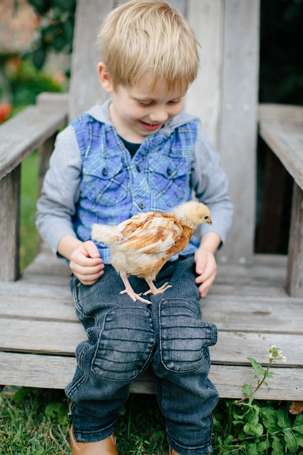 Sydney-Family-Photography-chicken.jpg