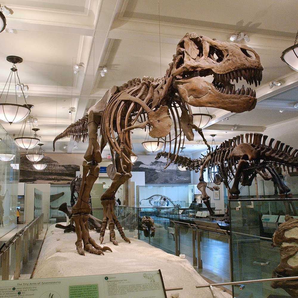 American Museum of Natural History (Manhattan, NY)