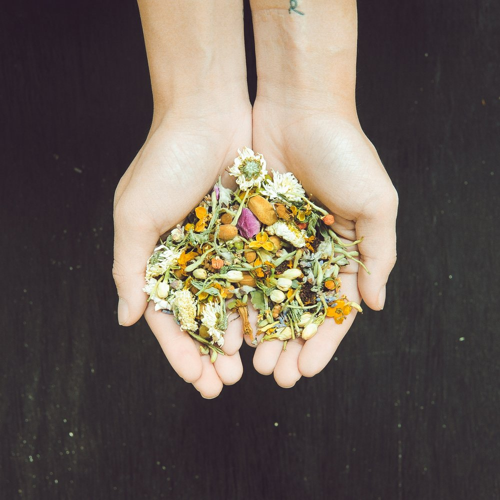 Wild + Vibrant - transformative herbal healing and sexual health sessions for potency, love, and release in support of her vision of a healed earth and sexuality.