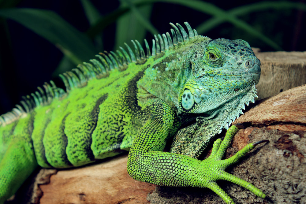 Aquarium & Reptile