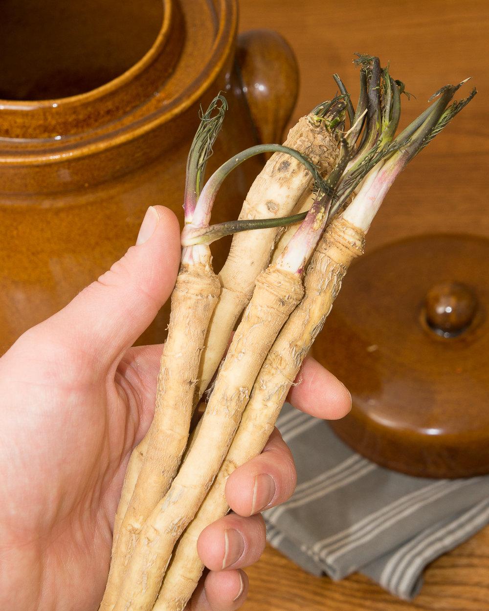 Horseradish... interesting stuff...