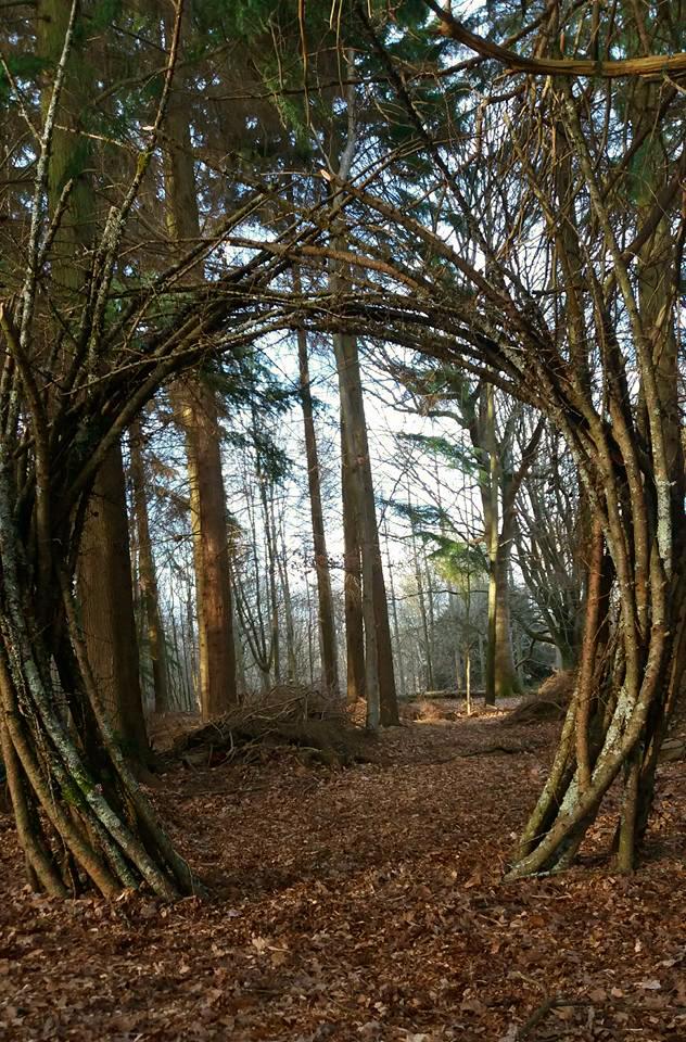 Lichen portal.jpg