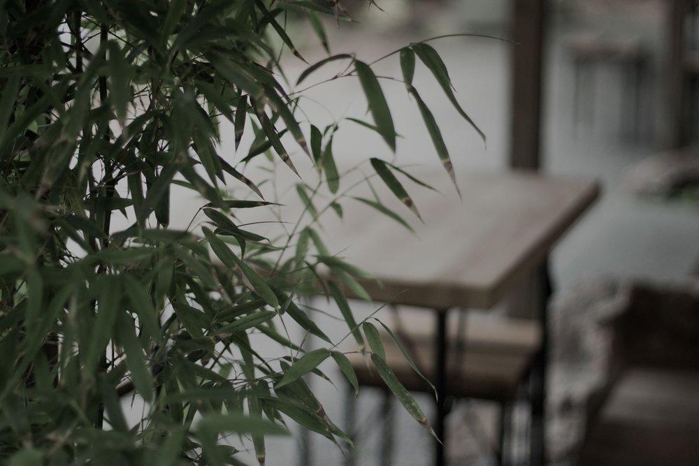 Živé rastliny navedú atmosféru pokoja - Adipisicing porta parturient vero volutpat blanditiis sunt voluptate facilis pellentesque? Leo nobis, dignissim hendrerit. Nihil sint, officiis saepe?