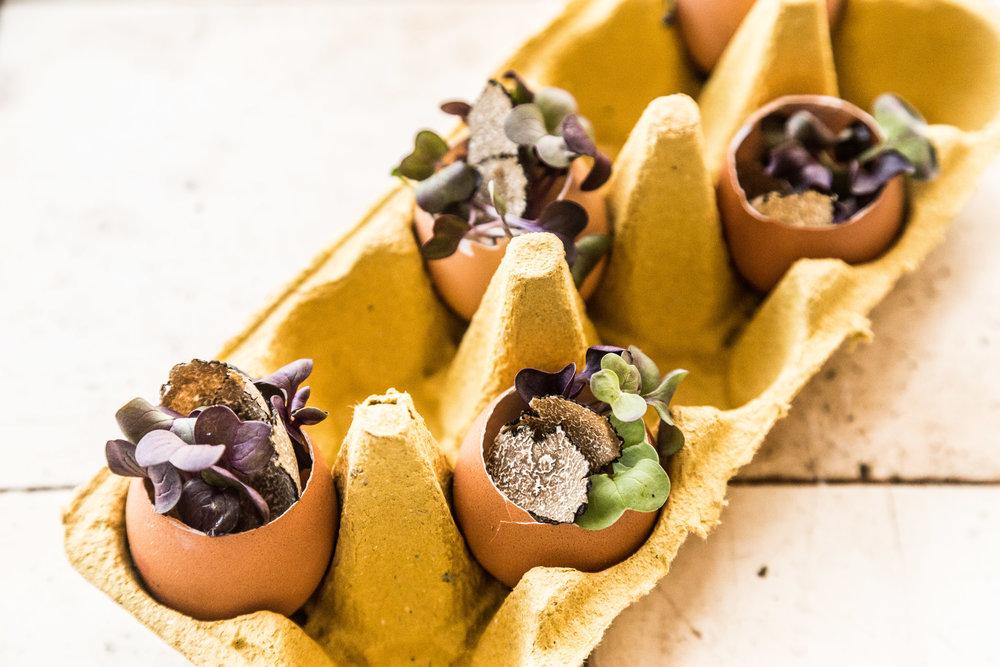 ægge-trøffel-snack - Øens Spisested - Foto Mikkel Bækgaard-2.jpg