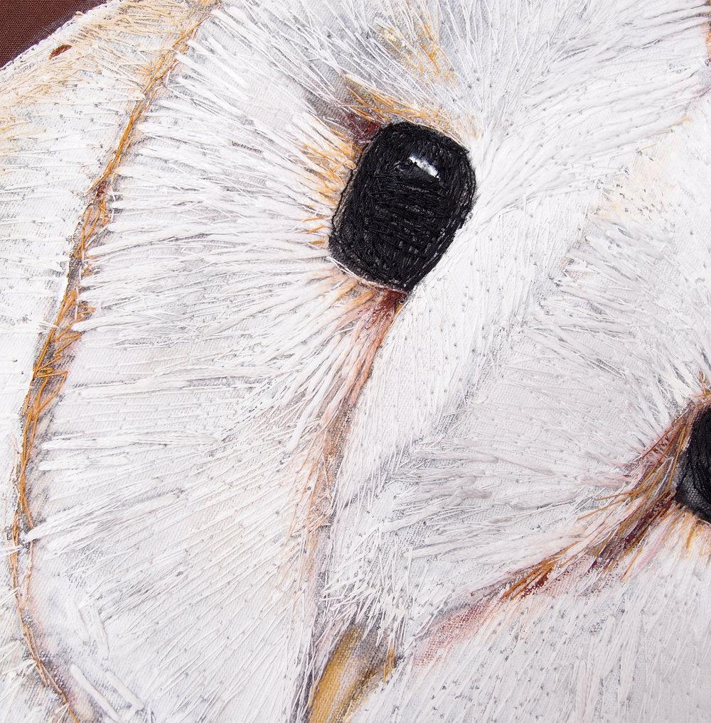 Barn Owl - Close up.jpg