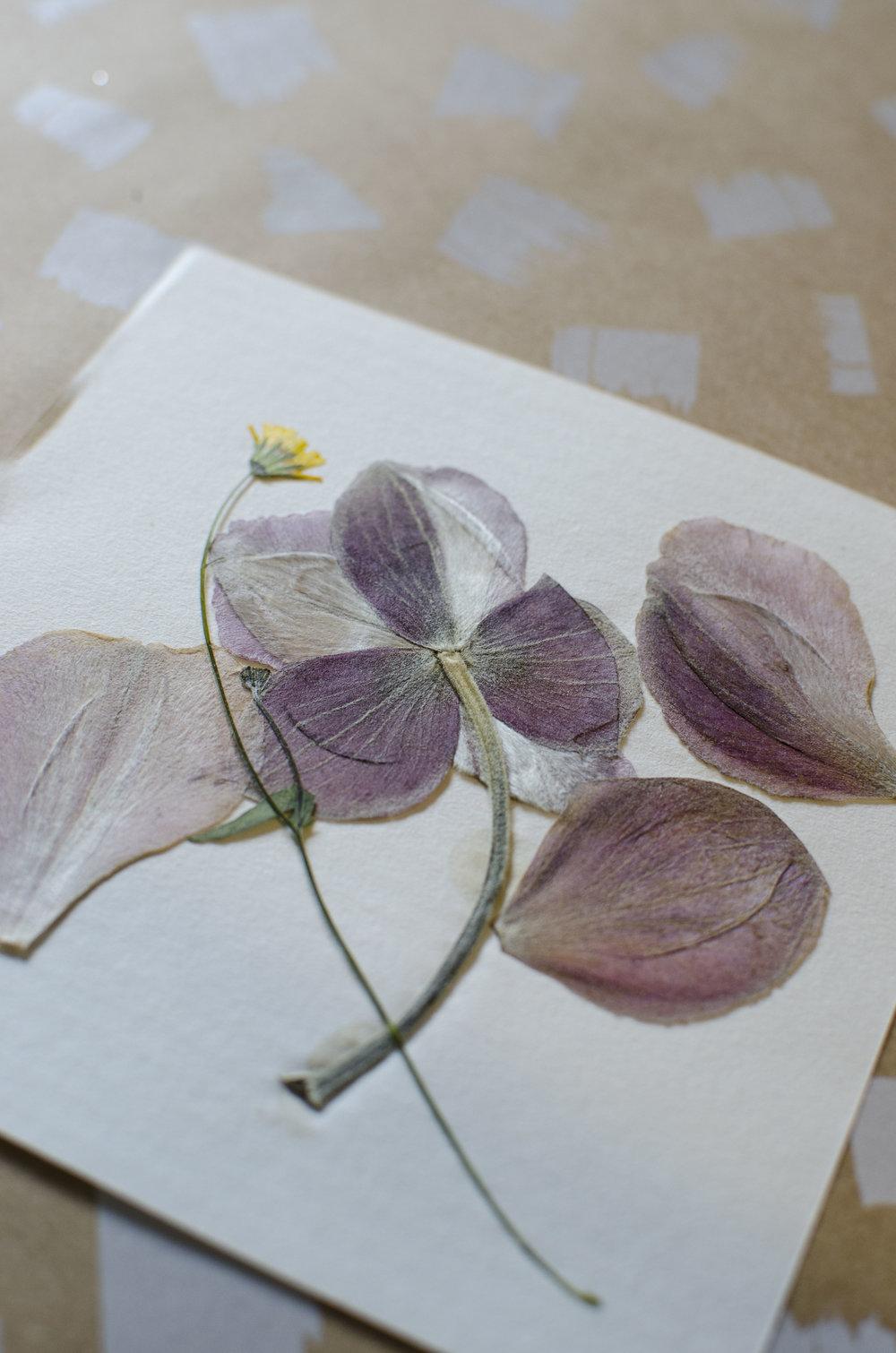 Diy flower press cards joyride diy flower press cards mightylinksfo