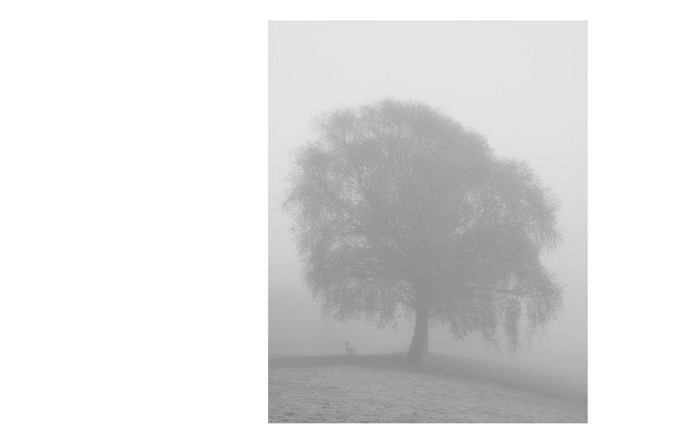 Fog  Crystal Palace Park, 2017