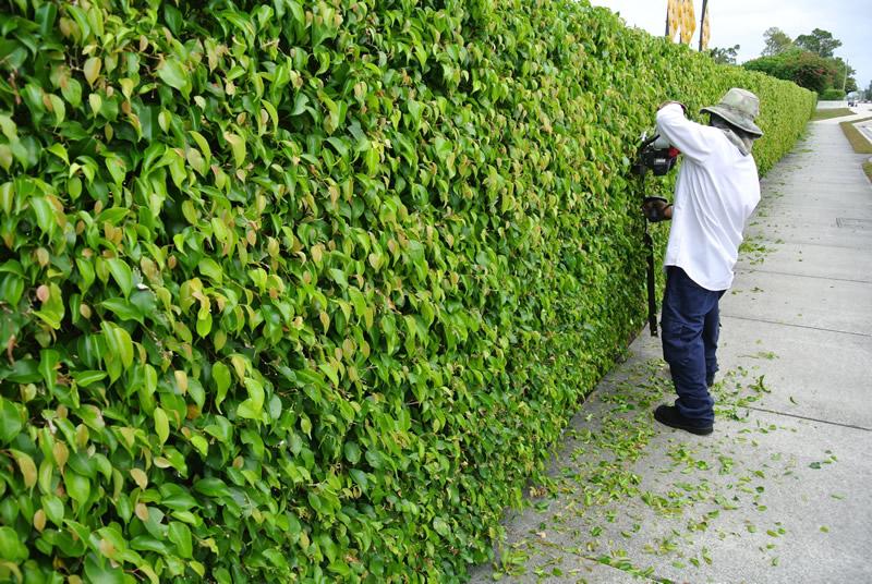 tree-trimming2.jpg