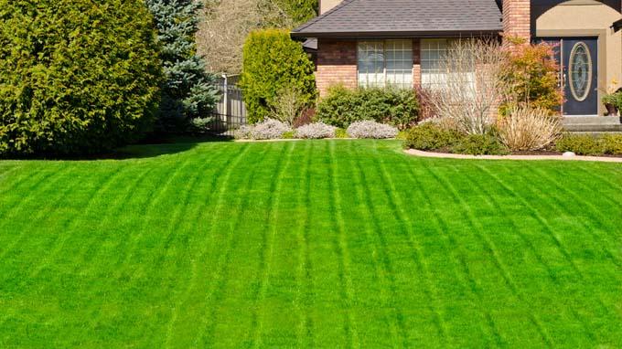 green-green-lawn.jpg