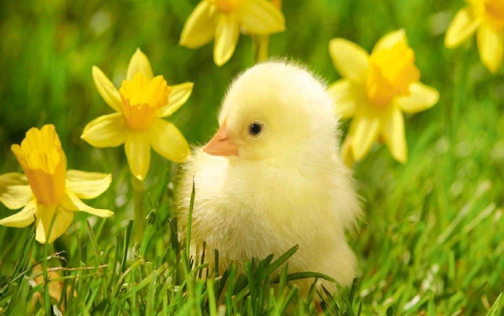 springtips_pic.jpg