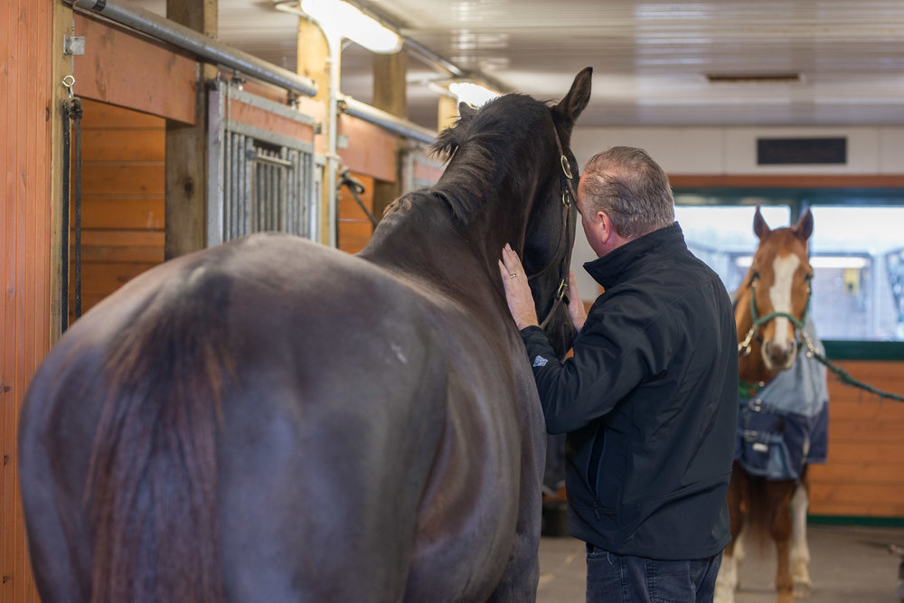 Rideau-Vet-Equine-Surgery-1.jpg