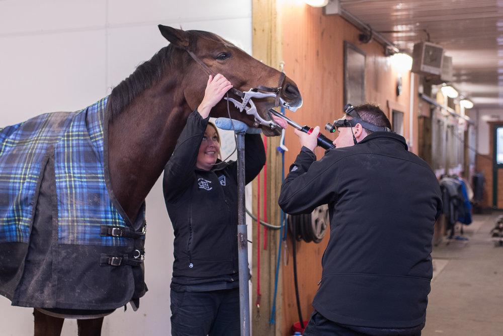 Rideau-Vet-Equine-Dentistry-1.jpg
