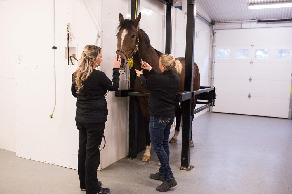 Rideau-Vet-Equine-cfia-1.jpg