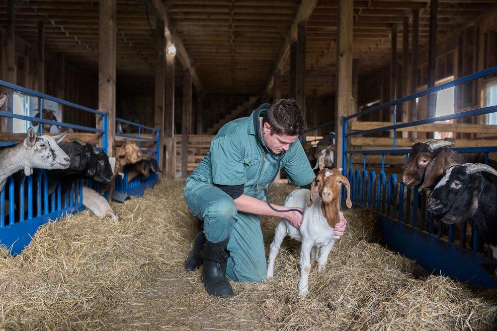 Rideau-Vet-goat-vet-1.jpg