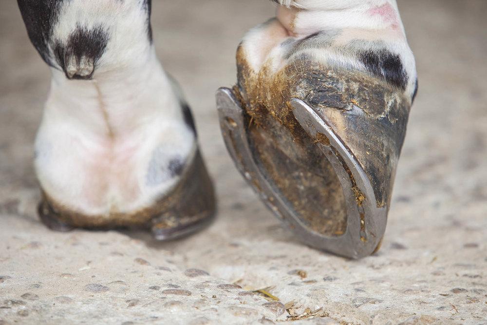 Rideau-Vet-Poultice-Feet.jpg