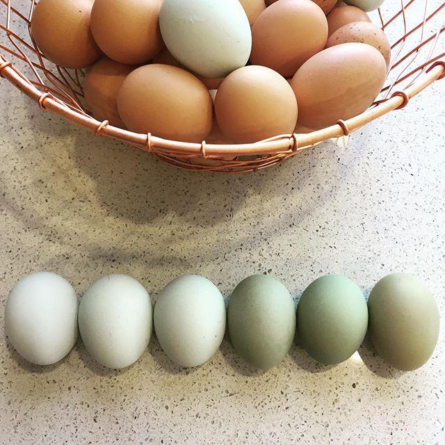 Egg washing ombré 😍!!!! .