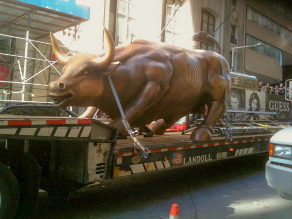 bull-9-2.jpg