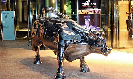 bull-abu.jpg