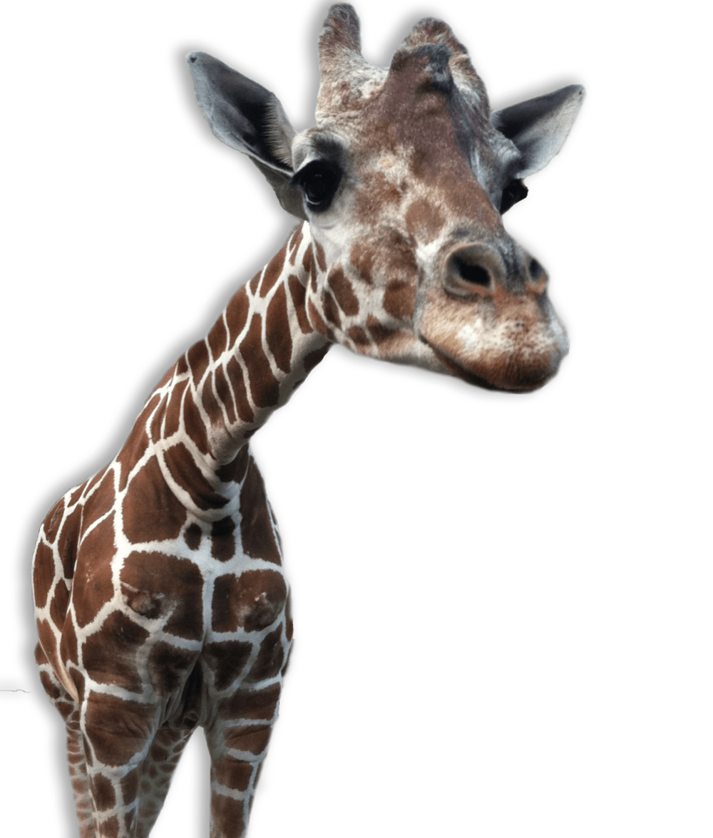 SLEEP LIKE GIRAFFES AND YOU CAN FREE UP TO 672 HOURS PER YEAR TO MAKE MORE OF THE THINGS YOU LOVE.