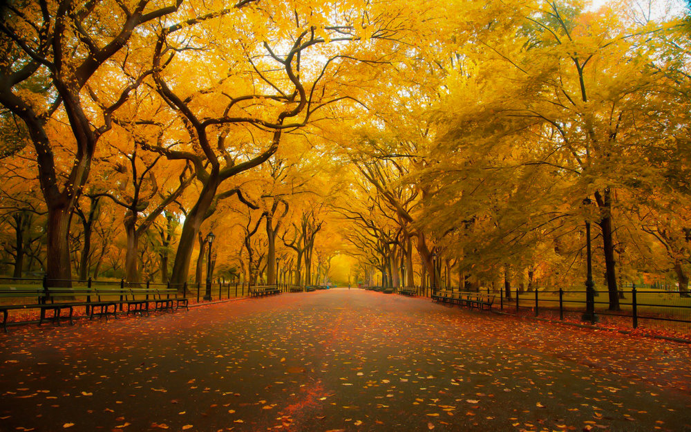 Central Park: autumn, early in the morning, you feel like you are walking on a natural carpet of leaves. Photo: Lucas Compan