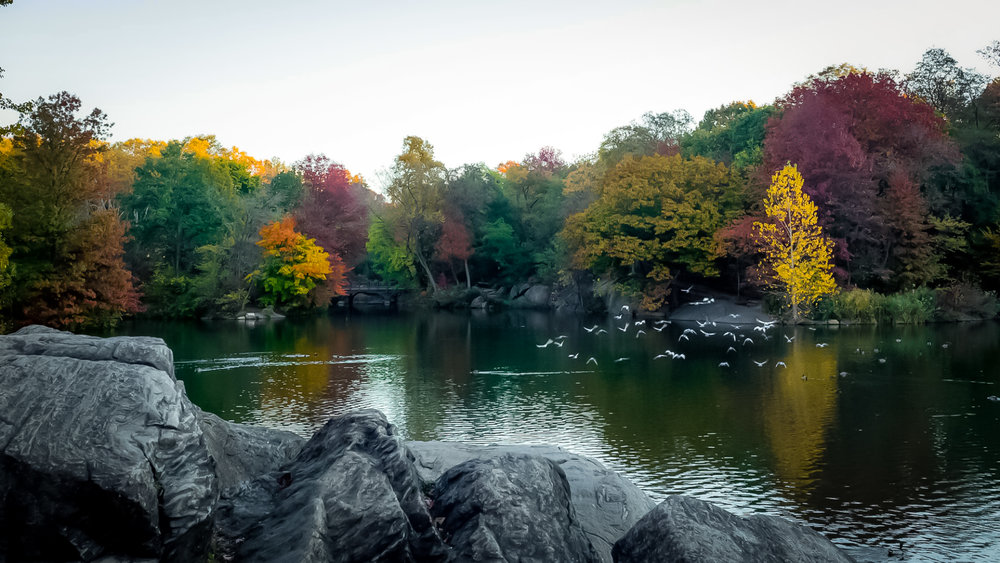 Everyday in Central Park, children and adults play, climb, and relax on ancient rocks which are approximately 450 million years old. image: central park conservancy