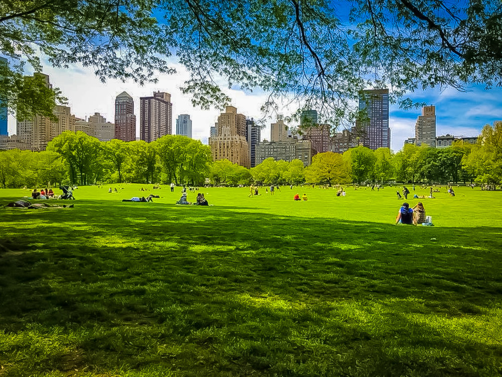 The Sheep's meadow in central park on a sunny day. Photo: Lucas Compan