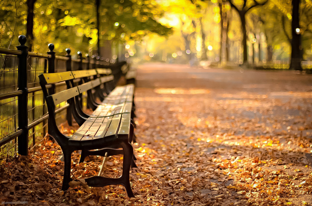 More than 9,000 benches in Central Park. Photo: Filmvacation