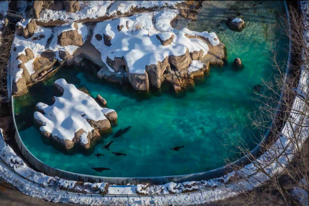 new york aquarium (coney island)