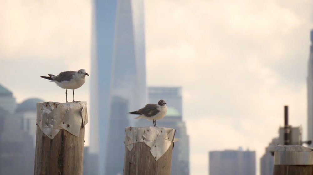 seagulls just chilling out. Photo: lucas compan