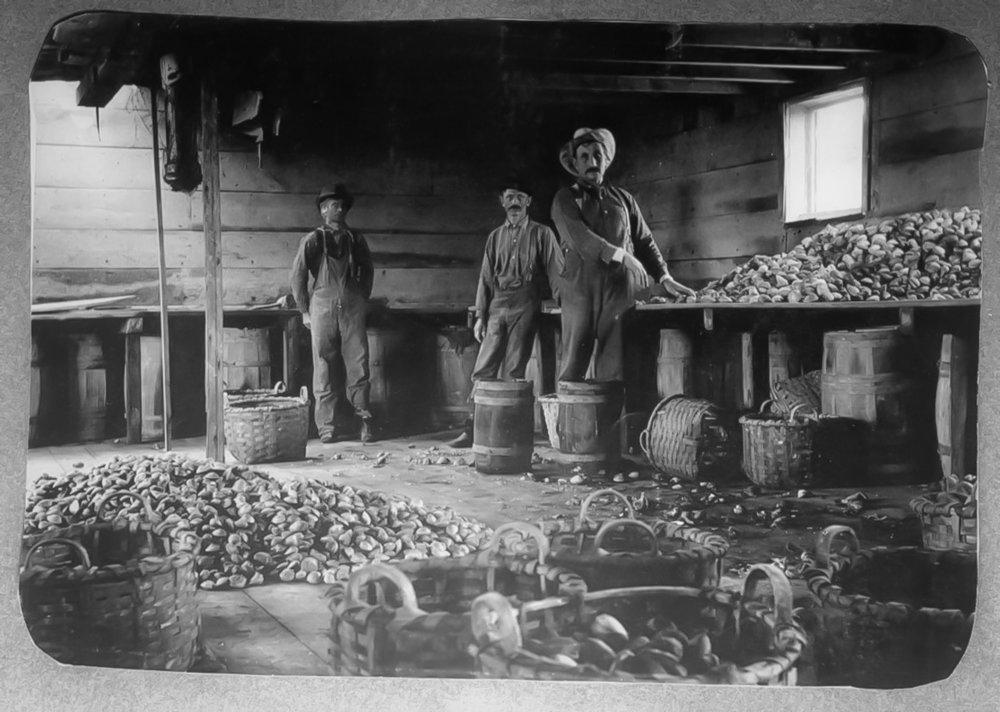 LAVORATORI NELLA BAIA DELL'OYSTER NEL 1890 CIRCA. IMMAGINE : NYPL