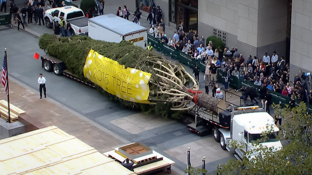 2015 Rockefeller Center Christmas Tree arriving at the site. Imaeg: rockefeller center