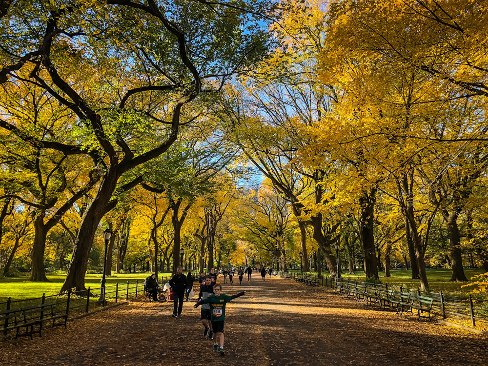 Autumn in New York city: Sunday morning, november 4, 2018, central park. photo: lucas compan
