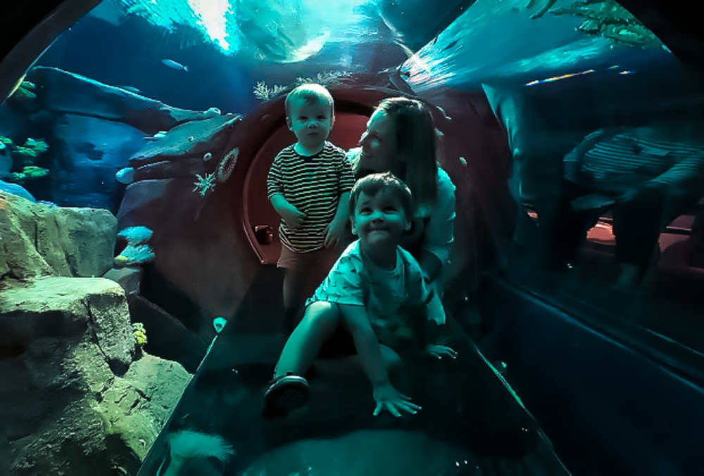 Crawl through a glass tunnel to feel like you're in the depths of the ocean, surrounded by marine life. Image credit:    Mommy Poppins