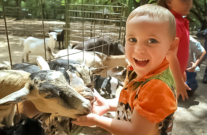 feeding goats in the middle of new york city? Yes, in central park zoo. image: google