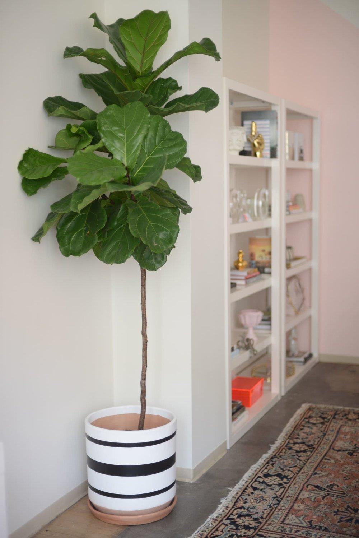 office-reveal_fiddle-leafjpg.jpg