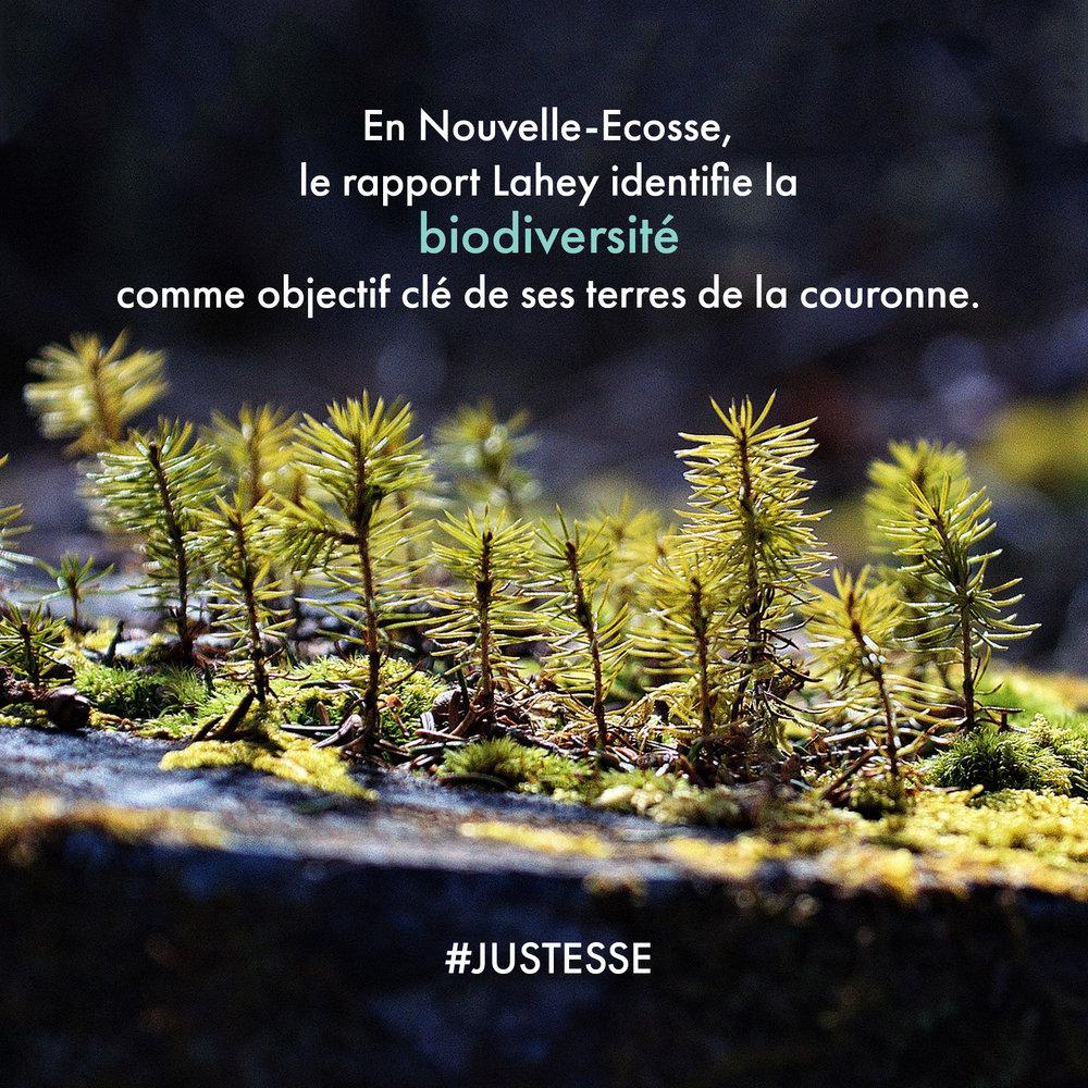 NS-biodiversité.jpg