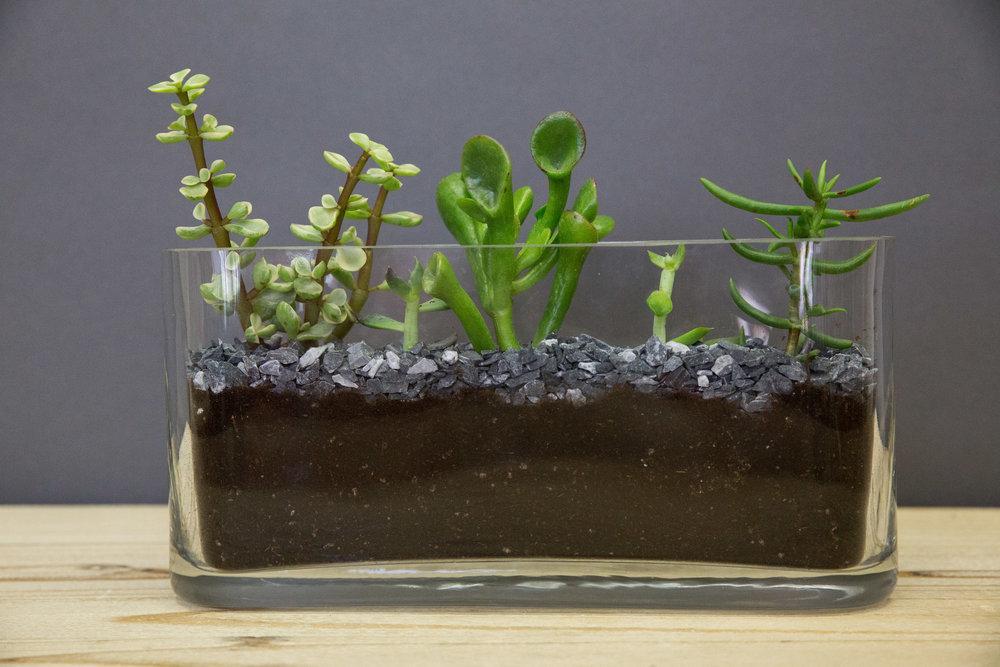 $100 arrangement-2.jpg