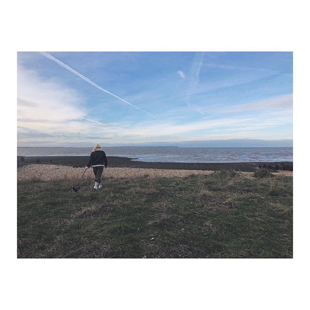 Find the tiny dog bum 🍑 #bythesea  #roadtrips #whitstable #explorers #adventuretime #chihuahuagram #familyouting #visitengland #fridayvibes