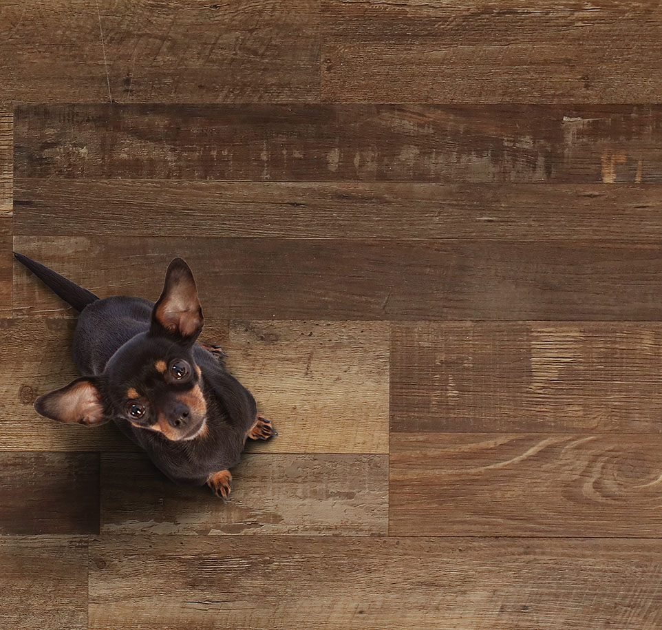 Wood Floors cascade Spokane room view small.jpg