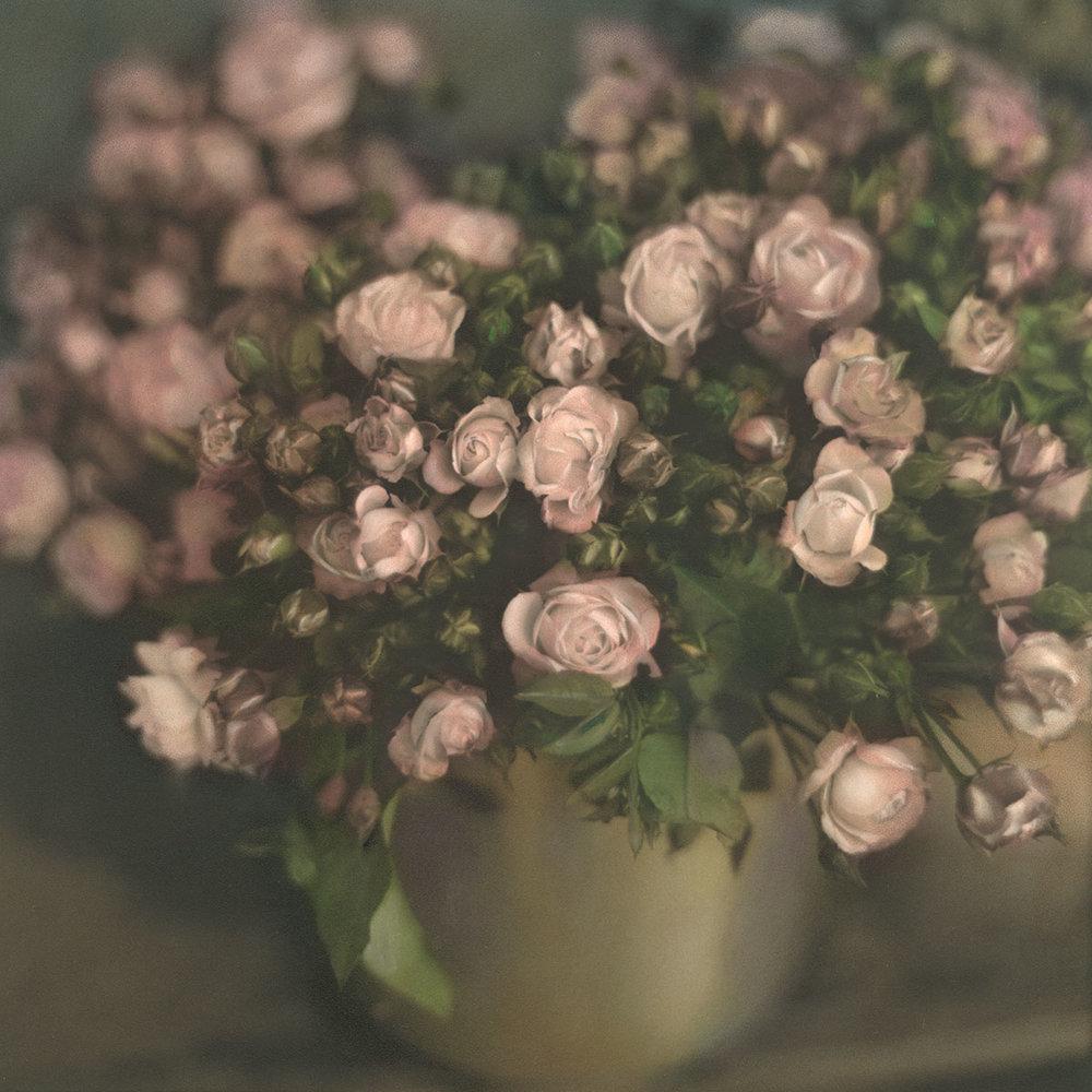 Frankfurt Roses